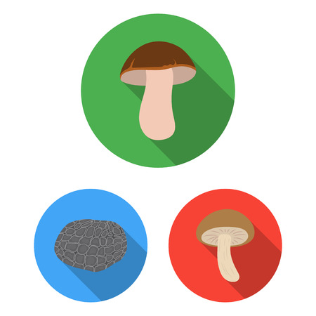 Poisonous and edible mushroom flat icons in set collection for design. Different types of mushrooms vector symbol stock  illustration. Vectores