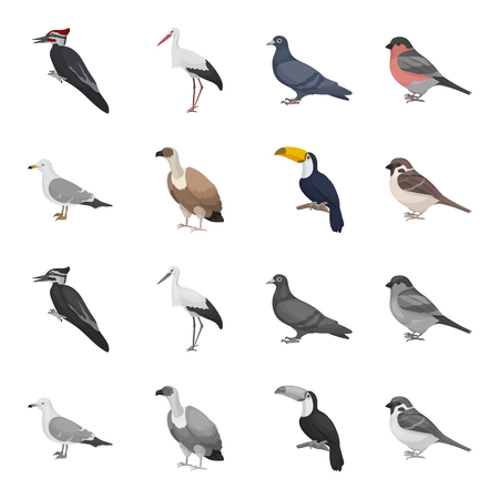 Gull, toucan and other species. Birds set collection icons in cartoon,monochrome style vector symbol stock illustration .