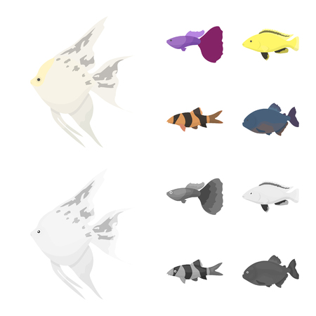 Botia, clown, piranha, cichlid, hummingbird, guppy,Fish set collection icons in cartoon,monochrome style vector symbol stock illustration  Illustration