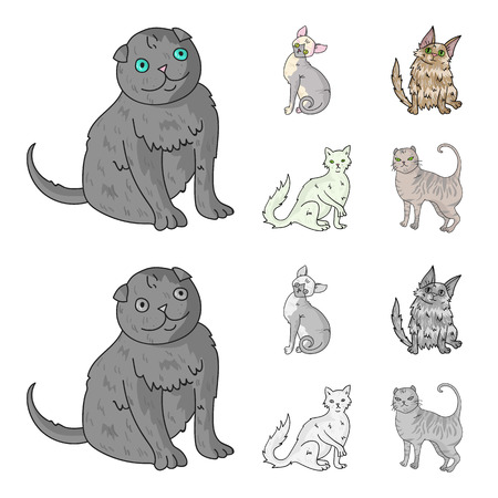 Turkish Angora, British longhair and other species. Cat breeds set collection icons in cartoon,monochrome style vector symbol stock illustration .