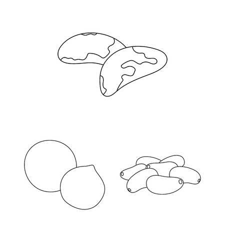 Different kinds of nuts outline icons in set collection for design.Nut Food vector symbol stock web illustration.