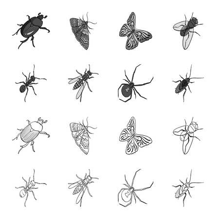 An insect arthropod, an osa, a spider, a cockroach. Insects set collection icons in outline,monochrome style vector symbol stock isometric illustration .