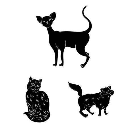 Breeds of cats black icons in set collection for design. Pet cat vector symbol stock web illustration.