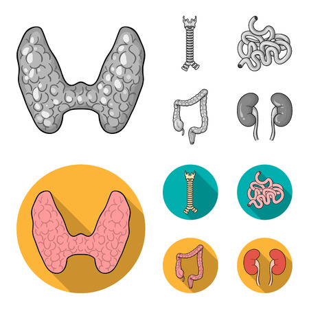 Thyroid gland, spine, small intestine, large intestine. Human organs set collection icons in monochrome,flat style vector symbol stock illustration web. Ilustracja