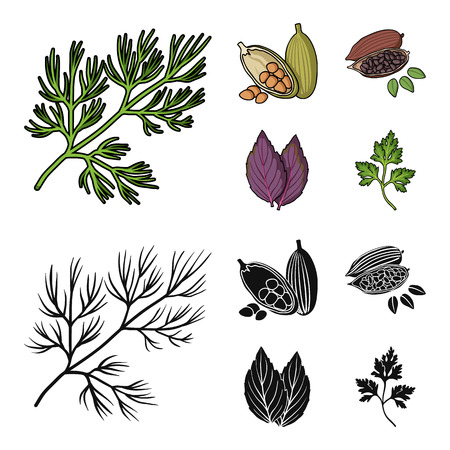 Dill, cocoa beans, basil.Herbs and spices set collection icons in cartoon,black style vector symbol stock illustration web. Фото со стока - 103631161