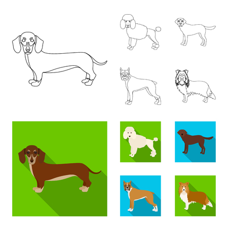 Dog breeds outline,flat icons in set collection for design.Dog pet vector symbol stock web illustration.