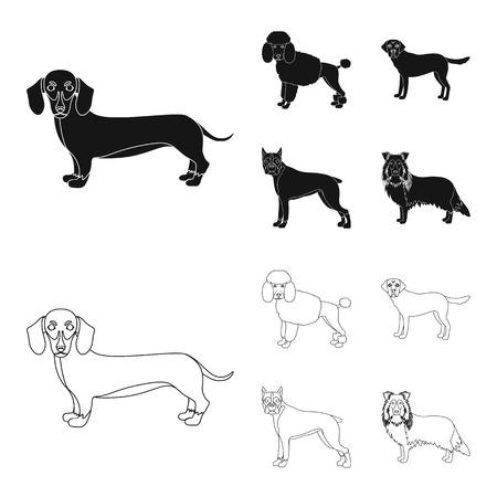 Dog breeds black,outline icons in set collection for design.Dog pet vector symbol stock  illustration.