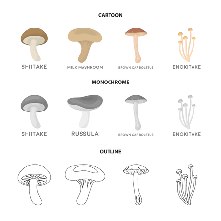 Shiitake, brown cap boletus, enokitake, milk. set collection icons in cartoon,outline,monochrome style vector symbol stock illustration web.