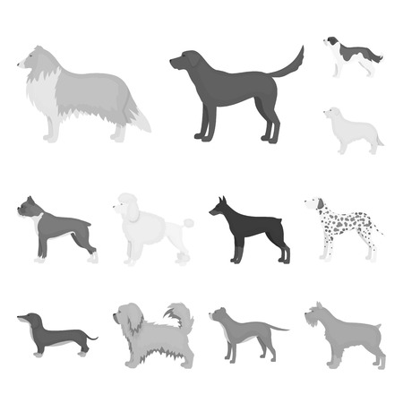 Dog breeds monochrome icons in set collection for design.Dog pet vector symbol stock web illustration.
