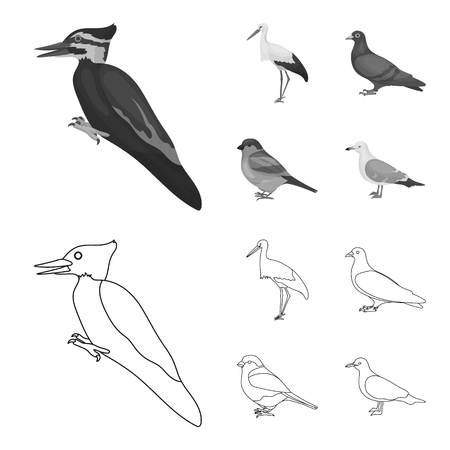 Woodpecker, stork and others. Birds set collection icons in outline,monochrome style vector symbol stock illustration . Ilustracja