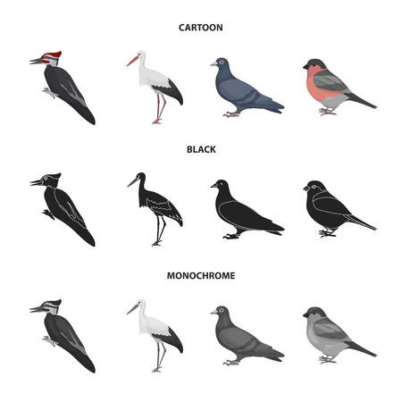 Woodpecker, stork and others. Birds set collection icons in cartoon,black,monochrome style vector symbol stock illustration web. Ilustracja