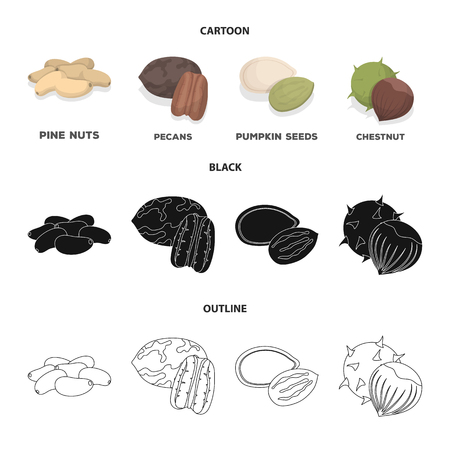 Pecan, pine nut, pumpkin seeds, chestnut.Different kinds of nuts set collection icons in cartoon,black,outline style vector symbol stock illustration web.
