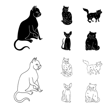 Sphinx, nibelung,norwegian forest cat and other species. Cat breeds set collection icons in black,outline style vector symbol stock illustration web.