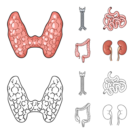 Thyroid gland, spine, small intestine, large intestine. Human organs set collection icons in cartoon,outline style vector symbol stock illustration . Vector Illustration