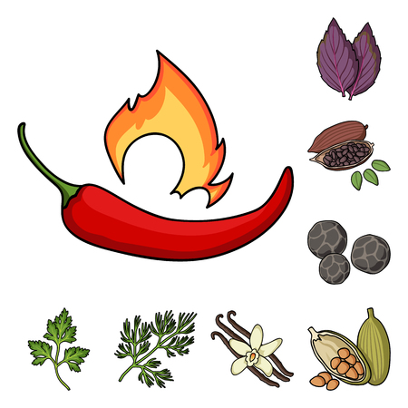 Herb and spices cartoon icons in set collection for design.Different kinds of seasonings vector symbol stock  illustration.