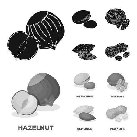 Hazelnut, pistachios, walnut, almonds.Different kinds of nuts set collection icons in black,monochrom style vector symbol stock illustration web.