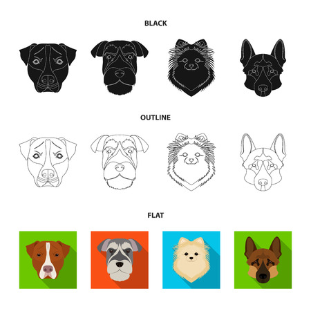 Muzzle of different breeds of dogs.Dog breed Stafford, Spitz, Risenschnauzer, German Shepherd set collection icons in black,flat,outline style vector symbol stock illustration .