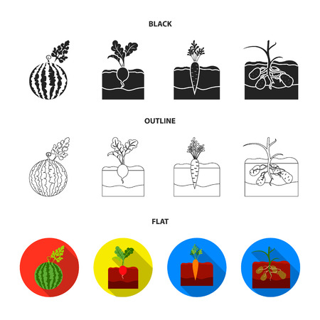 Watermelon, radish, carrots, potatoes. Plant set collection icons in black,flat,outline style vector symbol stock illustration . Illustration