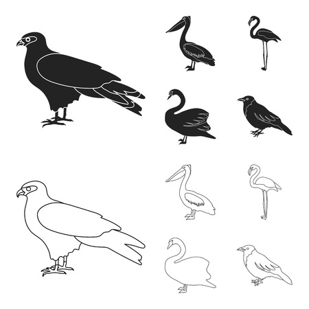 Kite, pelican, flamingo, swan. Birds set collection icons in black,outline style vector symbol stock illustration web.