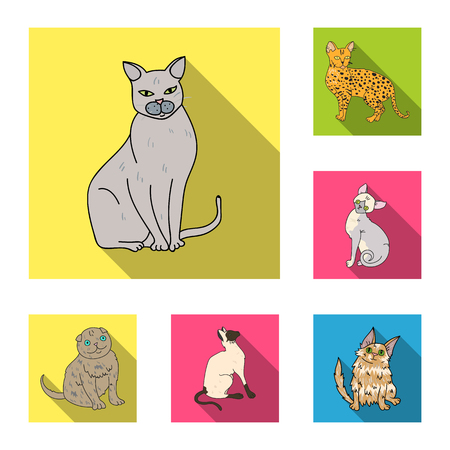 Breeds of cats flat icons in set collection for design. Pet cat vector symbol stock  illustration.