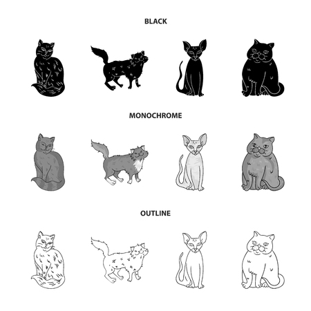 Sphinx, nibelung,norwegian forest cat and other species. Cat breeds set collection icons in black,monochrome,outline style vector symbol stock illustration web.