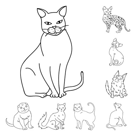 Breeds of cats outline icons in set collection for design. Pet cat vector symbol stock web illustration.