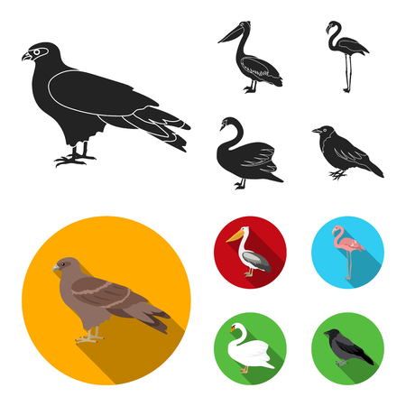 Kite, pelican, flamingo, swan. Birds set collection icons in black, flat style vector symbol stock illustration . Ilustração