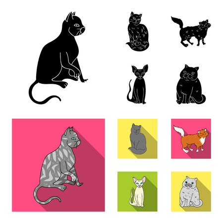 Sphinx, nibelung, norwegian forest cat and other species. Cat breeds set collection icons in black,flat style vector symbol stock illustration . 矢量图像