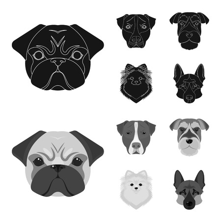 Muzzle of different breeds of dogs.Dog breed Stafford, Spitz, Risenschnauzer, German Shepherd set collection icons in black,monochrome style vector symbol stock illustration web.