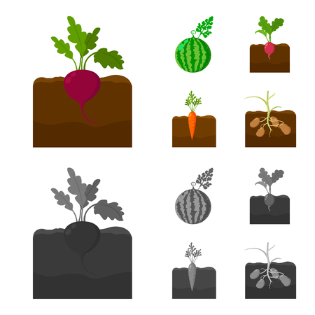 Watermelon, radish, carrots, potatoes. Plant set collection icons in cartoon,monochrome style vector symbol stock illustration . Vektorgrafik
