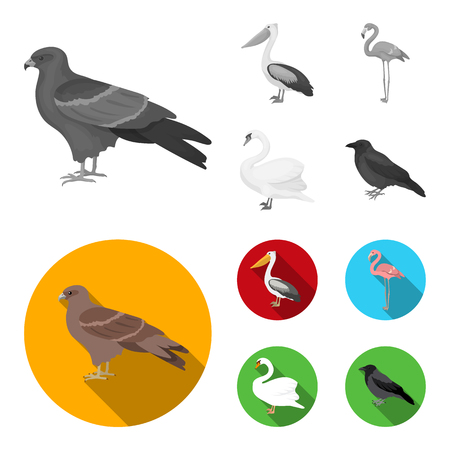 Kite, pelican, flamingo, swan. Birds set collection icons in monochrome,flat style vector symbol stock illustration . Ilustração