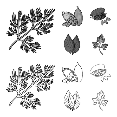 Dill, cocoa beans, basil.Herbs and spices set collection icons in outline,monochrome style vector symbol stock illustration web.