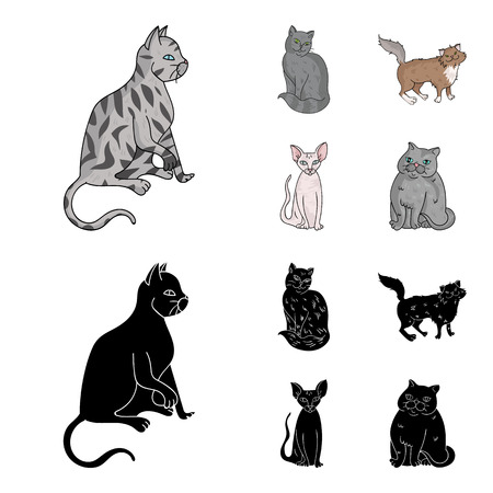 Sphinx, nibelung,norwegian forest cat and other species. Cat breeds set collection icons in cartoon,black style vector symbol stock illustration web.