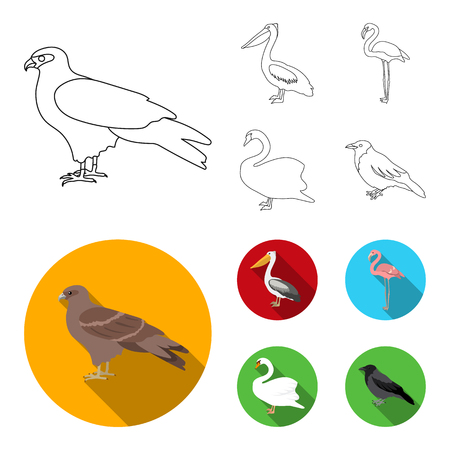 Kite, pelican, flamingo, swan. Birds set collection icons in outline,flat style vector symbol stock illustration web.