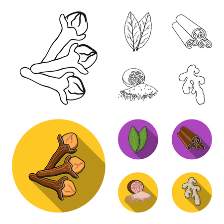 Clove, bay leaf, nutmeg, cinnamon.Herbs and spices set collection icons in outline,flat style vector symbol stock illustration web.
