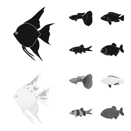 Botia, clown, piranha, cichlid, hummingbird, guppy,Fish set collection icons in black,monochrom style bitmap symbol stock illustration web.