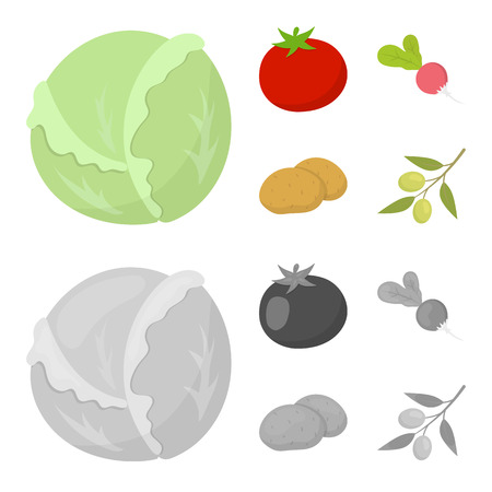 Cabbage white, tomato red, rice, potatoes. Vegetables set collection icons in cartoon,monochrome style bitmap symbol stock illustration .