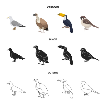 Gull, toucan and other species. Birds set collection icons in cartoon,black,outline style vector symbol stock illustration web.