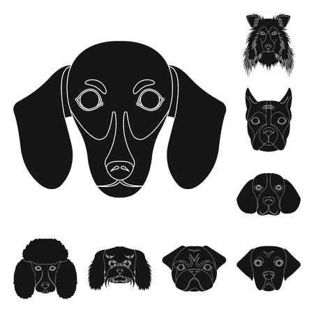Dog breeds black icons in set collection for design.Muzzle of a dog vector symbol stock  illustration.