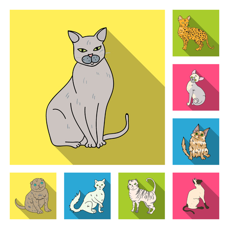 Breeds of cats flat icons in set collection for design. Pet cat vector symbol stock web illustration. Illustration