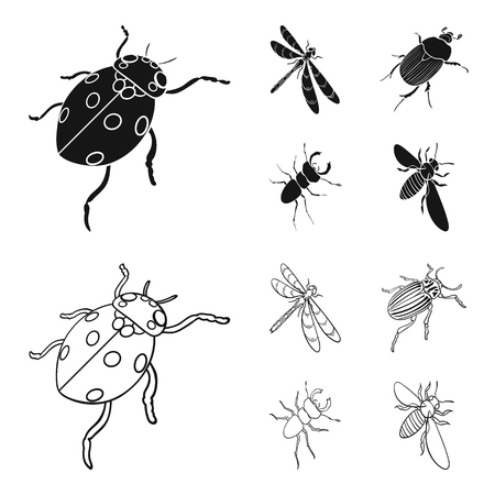 Arthropods Insect ladybird, dragonfly, beetle, Colorado beetle Insects set collection icons in black,outline style vector symbol stock isometric illustration web.