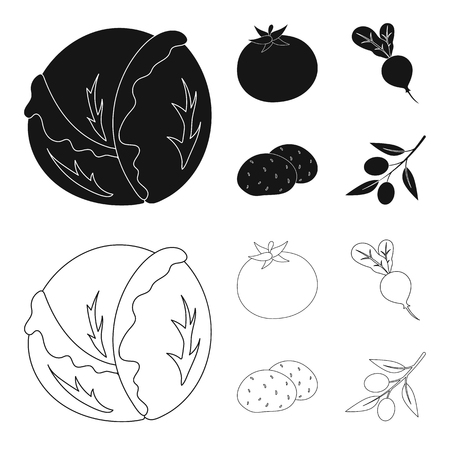 Cabbage white, tomato red, rice, potatoes. Vegetables set collection icons in black,outline style vector symbol stock illustration web.