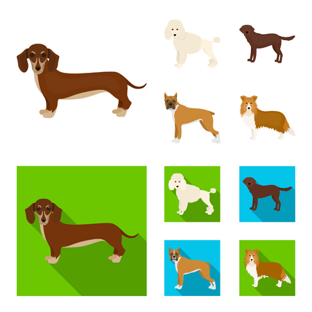Dog breeds cartoon,flat icons in set collection for design.Dog pet vector symbol stock web illustration.