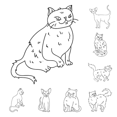 Breeds of cats outline icons in set collection for design. Pet cat bitmap symbol stock web illustration.