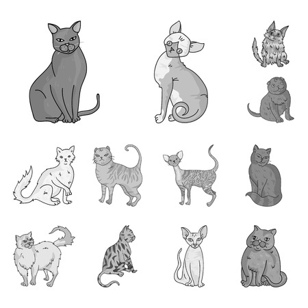 Breeds of cats monochrome icons in set collection for design. Pet cat bitmap symbol stock  illustration.