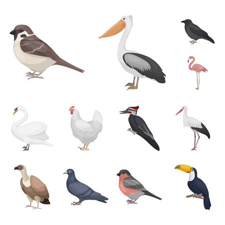 Types of birds cartoon icons in set collection for design. Home and wild bird bitmap symbol stock web illustration. Stock Photo