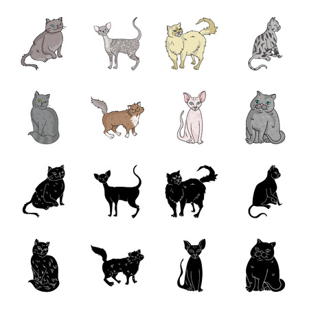 Sphinx, nibelung,norwegian forest cat and other species. Cat breeds set collection icons in black,cartoon style bitmap symbol stock illustration web.
