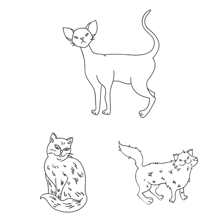 Breeds of cats outline icons in set collection for design. Pet cat vector symbol stock  illustration. Illustration