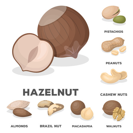 Different kinds of nuts cartoon icons in set collection for design.Nut Food vector symbol stock web illustration.