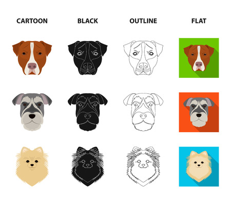Muzzle of different breeds of dogs.Dog breed Stafford, Spitz, Risenschnauzer, German Shepherd set collection icons in cartoon,black,outline,flat style vector symbol stock illustration web.